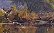 Bharatpur Wildlife Packages