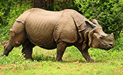 Kaziranga Wildlife Packages