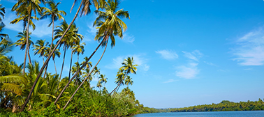 Nature's Bounty and Leisure in Kerala